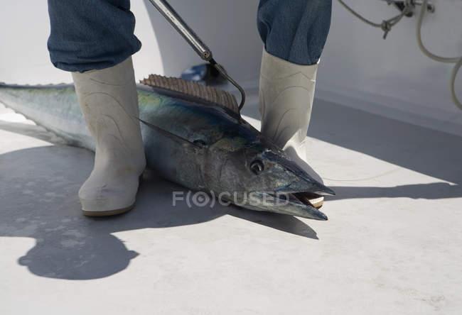 Peces entre los pies del pescador en la cubierta del barco - foto de stock