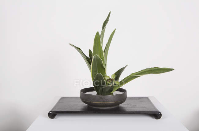 Potted plant on table on white background — Stock Photo