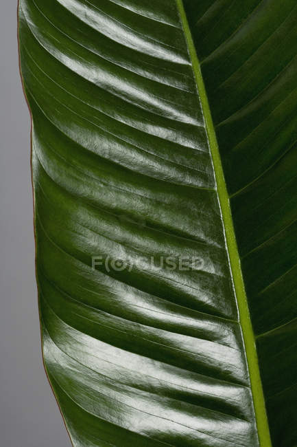 Close up view of shiny green leaf — Stock Photo