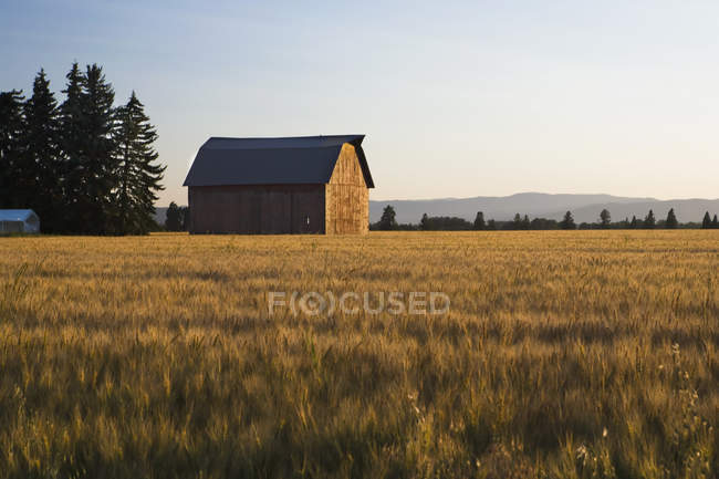 Distant view of barn in country field at sunset — Stock Photo