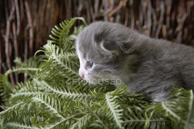 Deixa o gatinho rondando por monte de planta — Fotografia de Stock