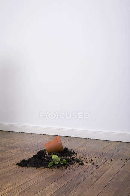 Broken potted plant on hardwood floor — Stock Photo