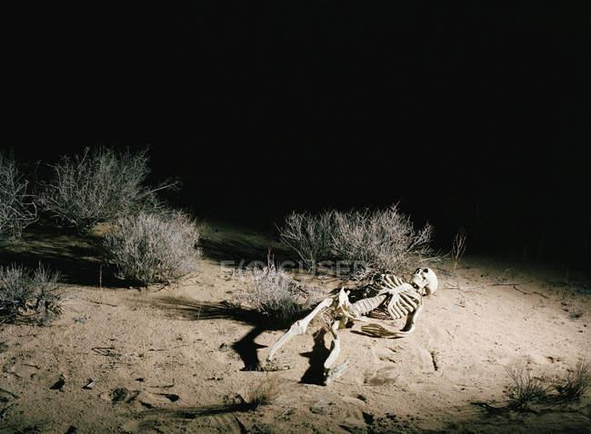 Scheletro umano in luce spot al deserto di notte — Foto stock
