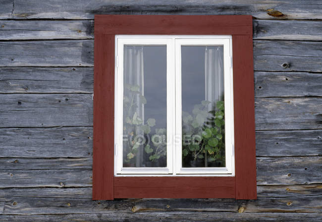 Wooden window with plants growing inside — Stock Photo