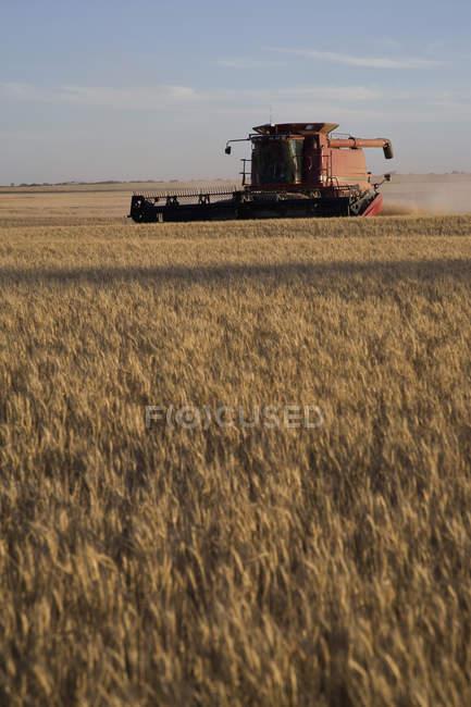 Vista in lontananza di combinare raccolta campo di frumento — Foto stock
