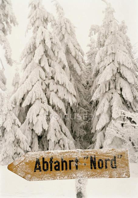 Sinal de seta de madeira na floresta coberta de neve — Fotografia de Stock