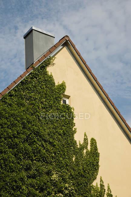Crop accogliente edificio edera abbracciato facciata sopra il cielo — Foto stock