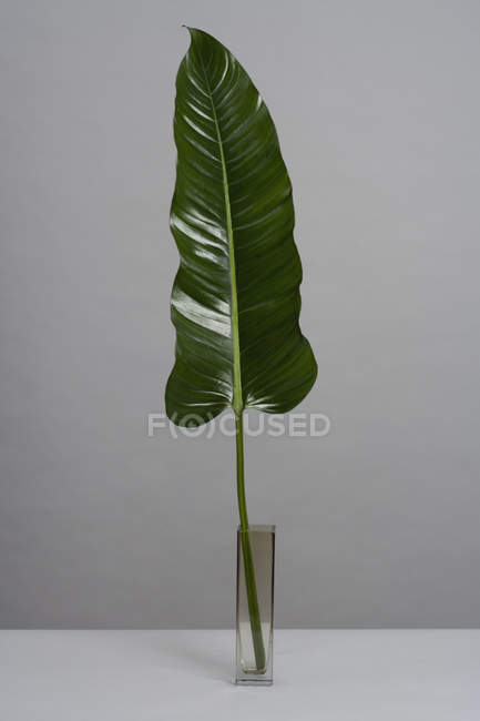 Shiny green leaf in glass vase — Stock Photo