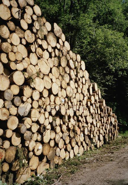 Perspektivische Ansicht des Stapels von Baumstämmen auf dem Land — Stockfoto