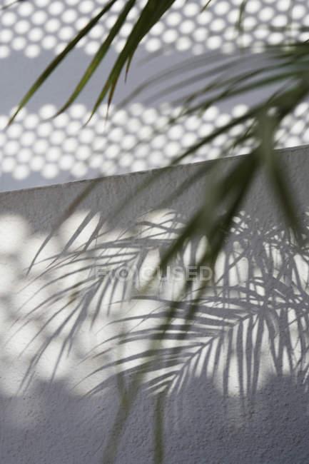 Тень пальмовых листьев на белой стене — стоковое фото