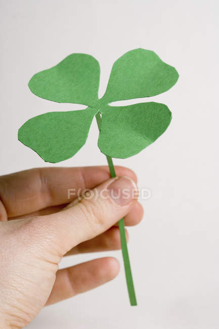 Crop hand holding four leafed clover on white background — Stock Photo