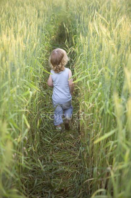 Ein kleiner Junge geht durch ein Karpfenfeld — Stockfoto