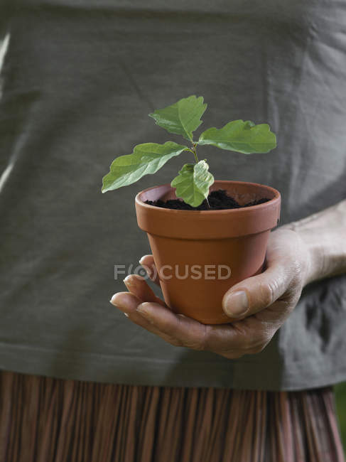 Crop female cupped hand holding potted plant — Stock Photo