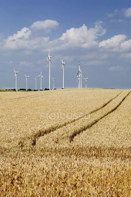 Landschaft des Weizenfeldes mit Windrädern — Stockfoto