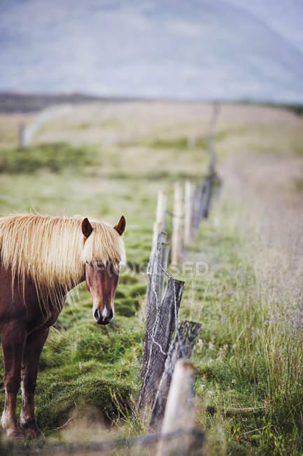 Cheval rural près d'une clôture au domaine ensoleillé — Photo de stock