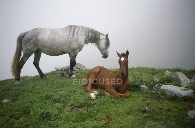 Ein Pferd und Fohlen auf Berg Felsvorsprung über Nebel — Stockfoto