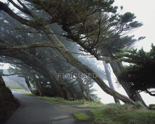 Inclinação de árvores que crescem ao longo do caminho na natureza — Fotografia de Stock