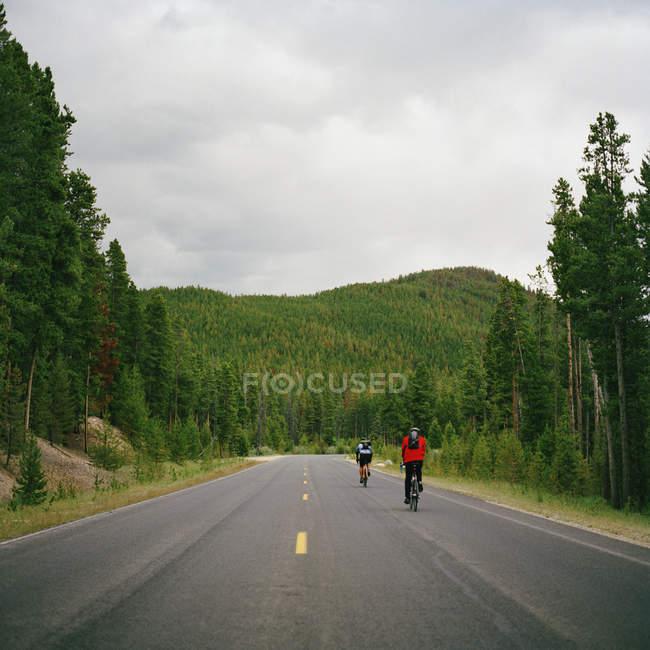 Задній вид на двох людей, їзда на велосипеді по дорозі — стокове фото