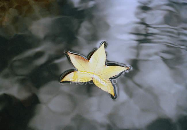 Sternförmige Blatt auf dem Wasser schwimmt — Stockfoto
