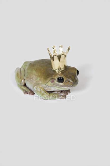 Крупним планом подання жаба носіння корони шпалерами білого кольору — стокове фото