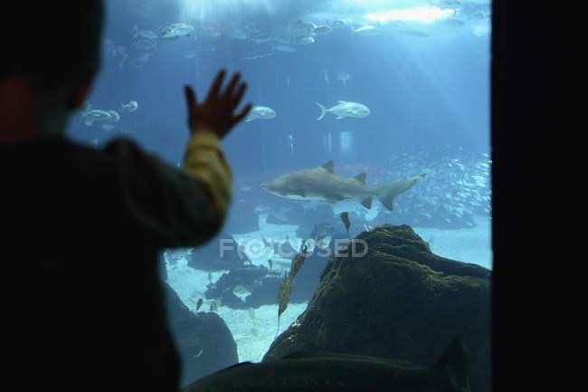 Vue arrière de l'enfant touchant la fenêtre de l'aquarium — Photo de stock