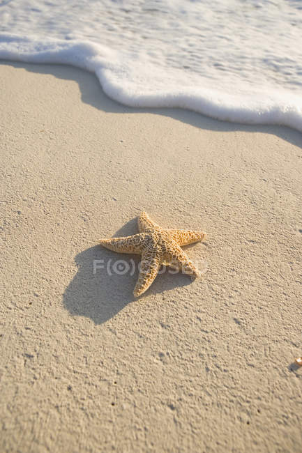 Still life of starfish on sand beach by surfing wave — Stock Photo