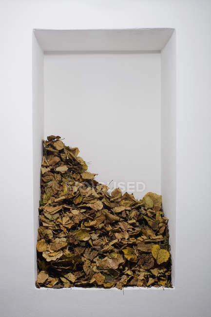 Куча опавших листьев на полке в белой стене — стоковое фото