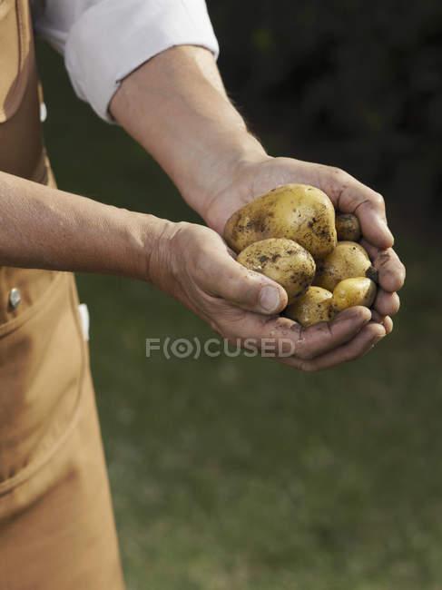 Міделю чоловік тримає жмені з картоплею — стокове фото