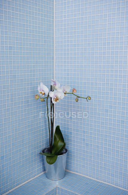 Impianto in angolo di bagno piastrellato blu — Foto stock