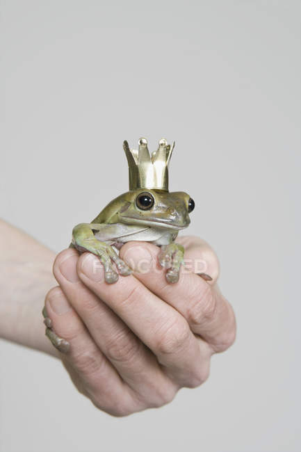 Crop hand holding frog wearing gold crown — Stock Photo