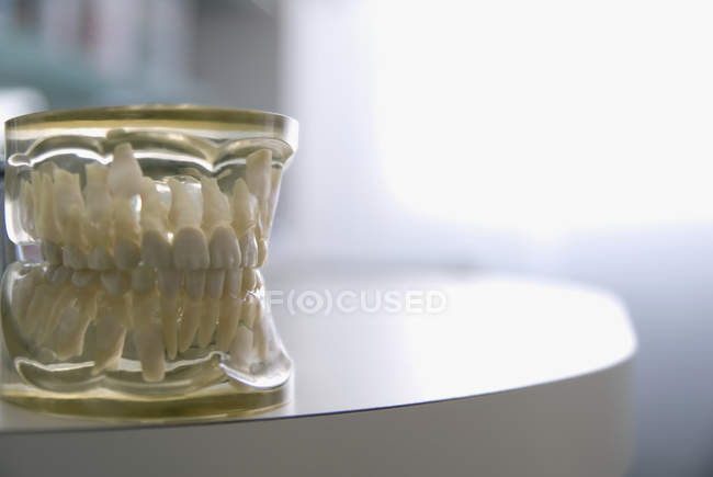 Close up view of resin Dental Model of teeth — Stock Photo