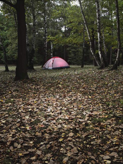 Tente rose placée en forêt d'automne — Photo de stock