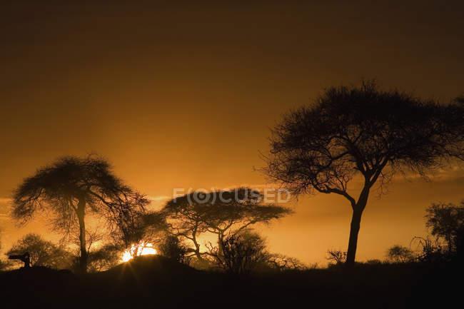 Силуэты над сафари закат небо — стоковое фото