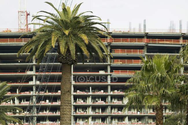 Пальмові дерева перед висотних фасад будівлі — стокове фото