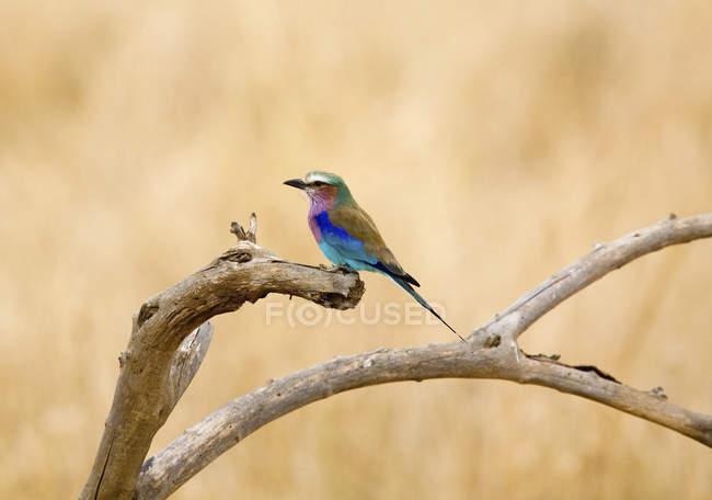Птица усаживаться на ветке на светлой природе — стоковое фото