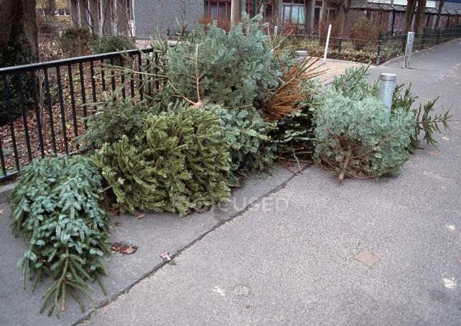 Poucas árvores de Natal abandonadas na calçada da rua — Fotografia de Stock