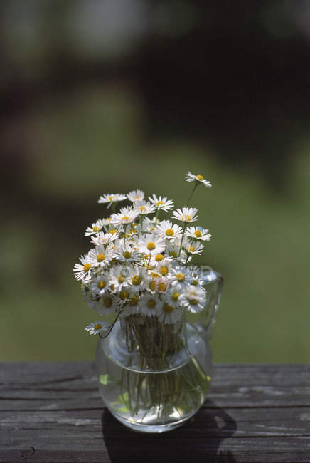 Daisies in vase on wooden table edge — Stock Photo