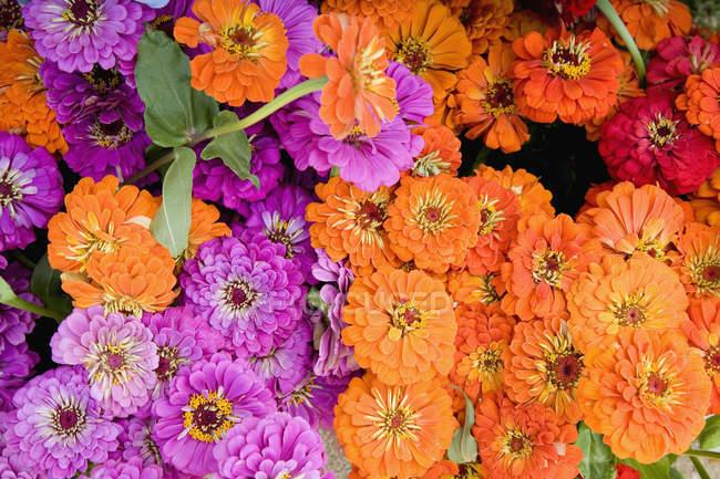 Полный кадр цветущих цветов — стоковое фото