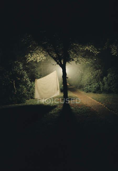 Folha branca pendurada na árvore à noite — Fotografia de Stock