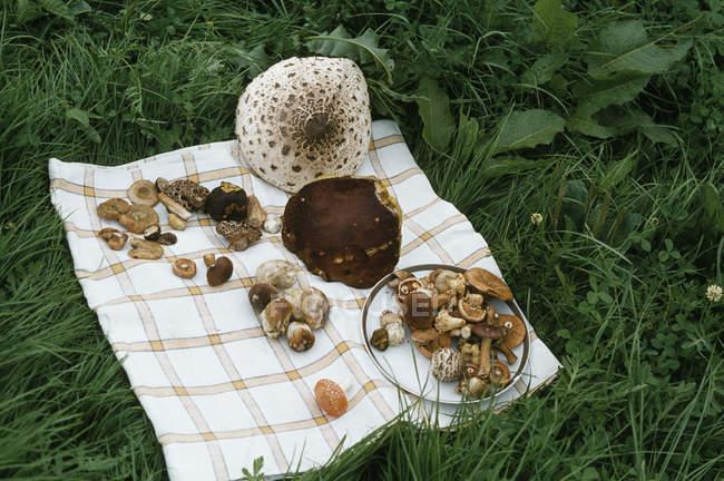 Колекція диких грибів на рушник на газон — стокове фото