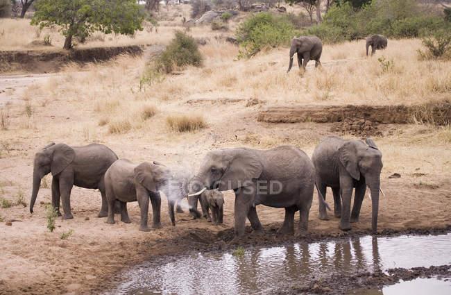 Troupeau d'éléphants d'Afrique à trou d'eau — Photo de stock