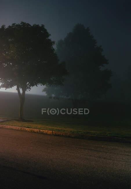 Туманная сцена пригородного парка ночью — стоковое фото