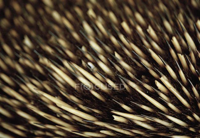 Full frame shot of Echidna's bristles — Stock Photo