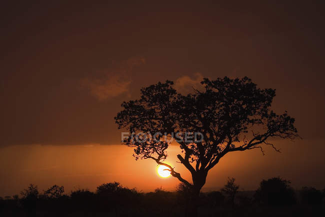 Scenic view to tree silhouette over sunset sky — Stock Photo