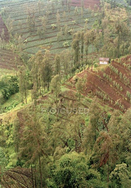 Cultures dans les champs en terrasses et huton rural hill — Photo de stock