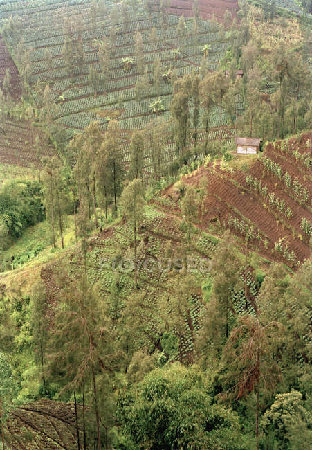 Crops in terraced fields and rural huton hill — Stock Photo