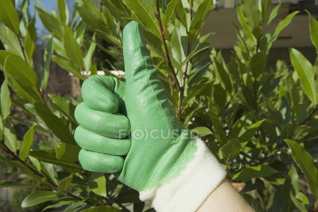 Crop hand wearing gardening glove showing thumbs up — Stock Photo
