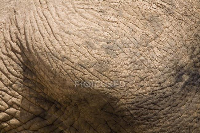 Colpo pieno di pelle di elefante — Foto stock