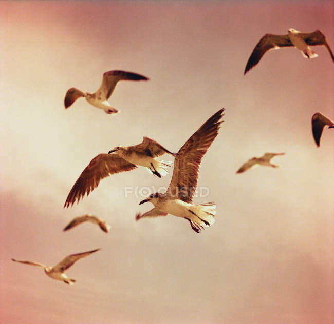 Scenic view to seagulls flying in mid-air — Stock Photo