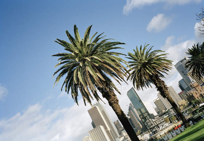Tilted view of palms trees and skyscrapers on summer day — Stock Photo